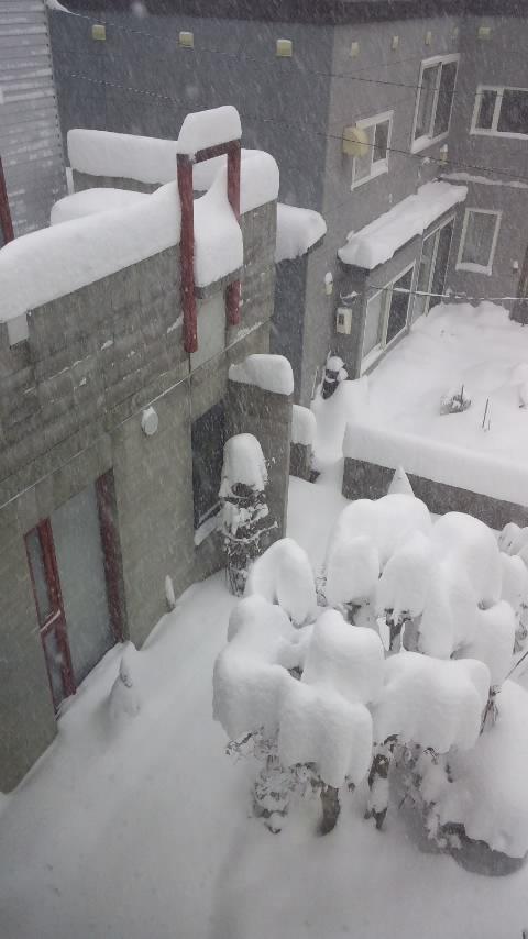 いや〜、凄い雪です。